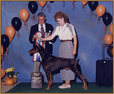 Ryan - Best in Show, 2 years old